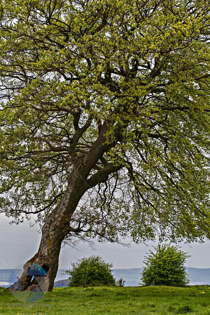Afternoon walk on Rodborough Common